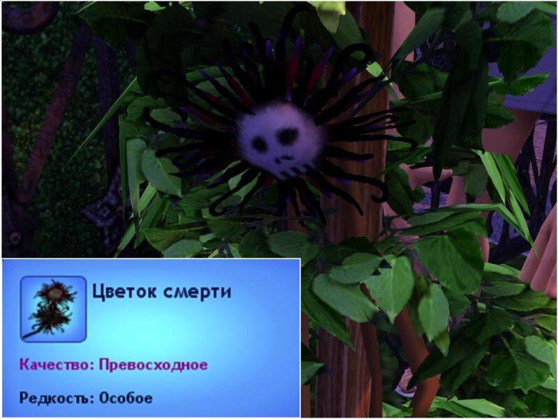 как найти цветок смерти в Симс 3