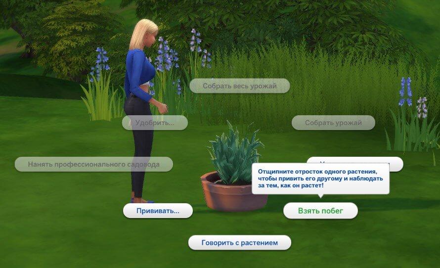 Побег орхидеи для цветка смерти в симс 4